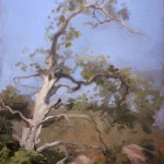 Tree by Laguna Beach, ©2009 By Adrian Gottlieb